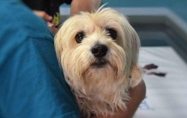חיסוני כלבים – למה זה חשוב