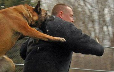 איך למנוע מהכלב לקפוץ על אנשים