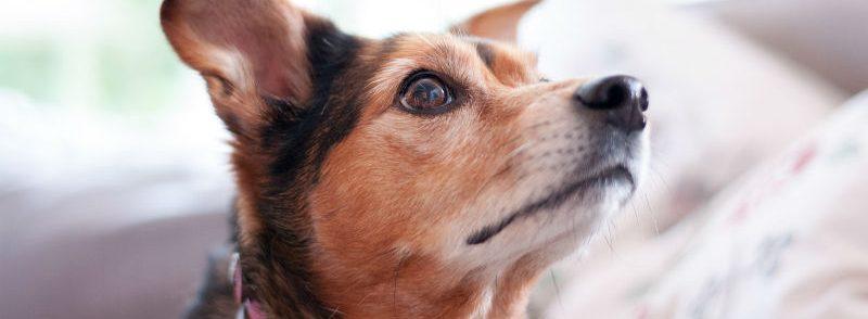 איך למנוע מהכלב גרימת נזקים לבית ולגינה