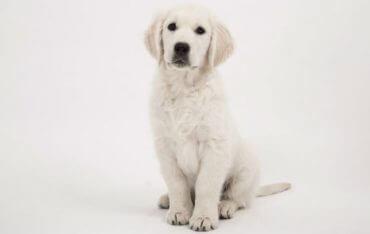 איך לגרום לכלב לשבת לפי פקודה