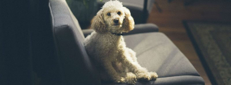Things to Know Before Taking a Dog to Pension