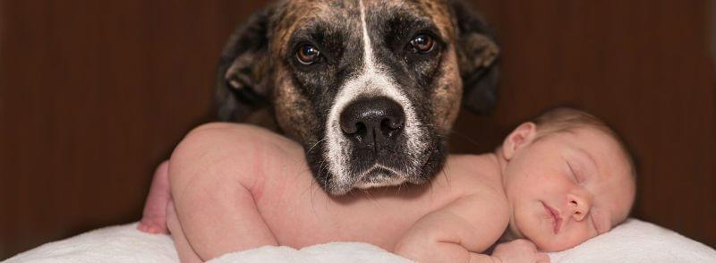 איך להכיר לכלב תינוק חדש